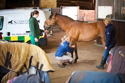 vet-photography-seadown2012-2217