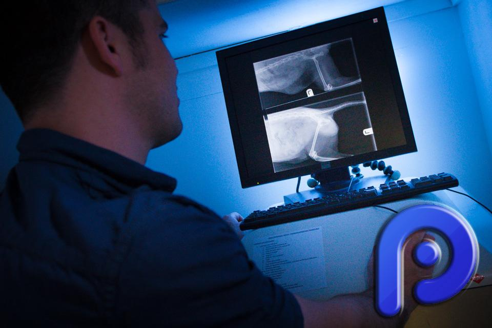 Vet Photography of Digital Xray Machine being used
