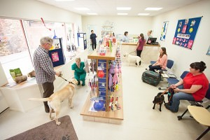 Veterinary  Photography - Busy Reception